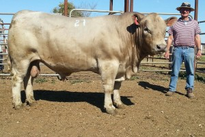 Top price bull $7000 Wallawong Waterboy with buyer David Schouten